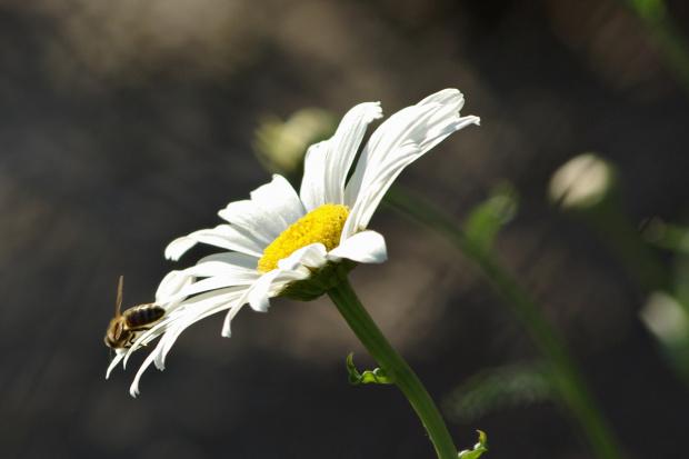 #kwiaty #natura
