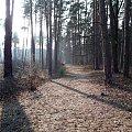 Okolice Leżajska #las #lasek #bagna #krajobraz #lezajsk #leżajsk #floryda #wiosna #przyroda #sosnowy #sosna #droga #leśna #dróżka
