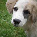 #pies #pysk #zwierzęta #ciapek #piesek