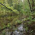 #drzewa #woda #NiebieskieŹródła #TomaszówMazowiecki