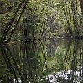 #woda #drzewa #NiebieskieŹródła #TomaszówMazowiecki