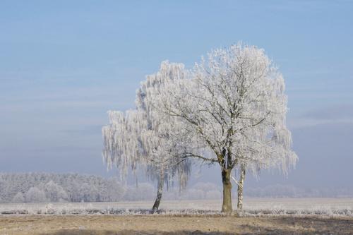 w końcu tak, jak lubię.... chyba jak, lubimy wszyscy :) #zima #styczeń #pola #drzewa #szadź #niebo #krajobraz