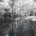 #infrared #podczerwień #photoshop #las #woda #drzewa