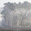 #zima #las #szron #pole #droga #styczeń