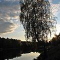 #zalew #niebo #jesień #drzewo #brzoza