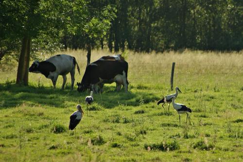 z dna szuflady :) #lato #łąka #zwierzęta #krowy #bociany