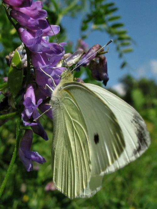 ... #natura #przyroda #motyl