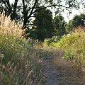 #lato #natura #dróżka #ścieżka #drzewa #trawy