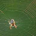 #natura #pająk #pajęczyna