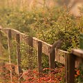 ... tymi fotkami żegnam się z Wami na tydzień ... życzę Wam dobrej pogody i miłych dni ... :)) #jesień #przyroda #ptaki #krajobraz #ogród #płot #kos