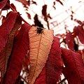 ostatnia mucha.. #mucha #jesień #ostatnie