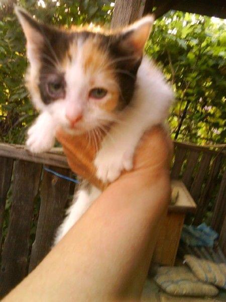 Działkowy kotek Danusi
