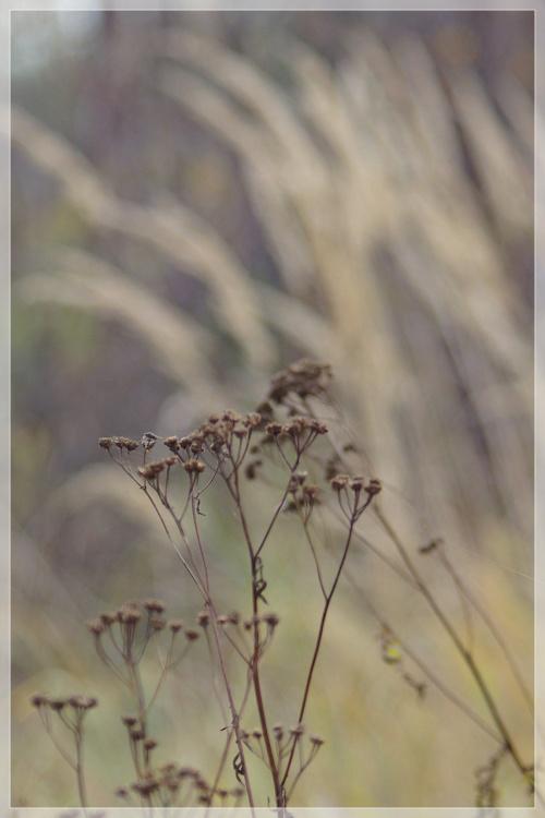 #jesień #trawy