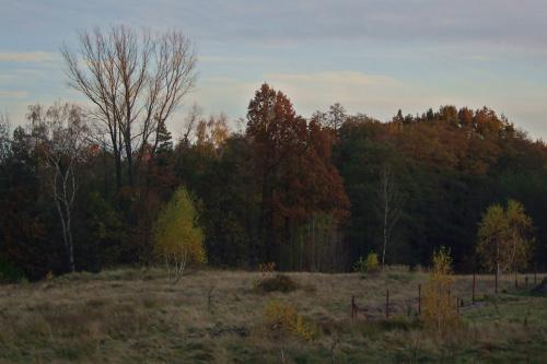 #jesień #las #natura