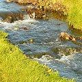 Potok w okolicach Lubonia. #Luboń #potok