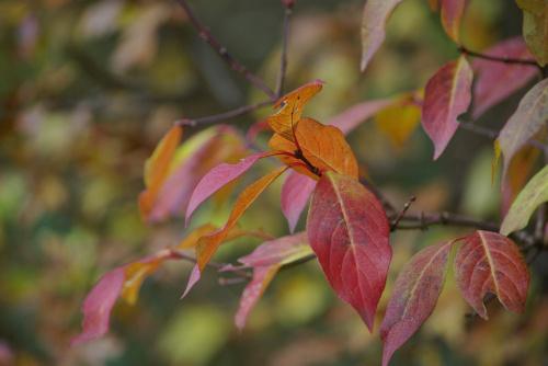 #liście #jesień