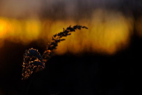 #niebo #trawy #ZachódSłońca