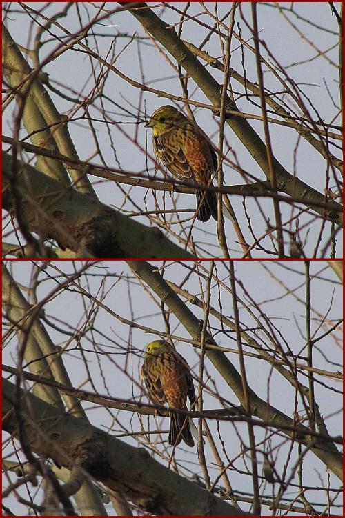 nie wiem co to za ptaszek, może pan czyżyk :)