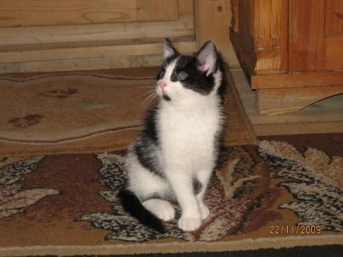 Kotek coś obserwuje. #kotek