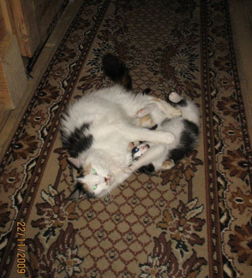 Wspólna zabawa......... #koty