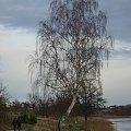 #zalew #drzewo #brzoza #jesień