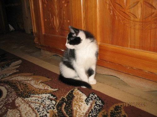 Jakaś obserwacja.... #kotek