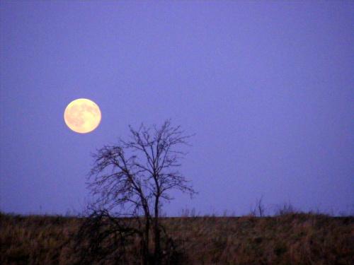 tak wschodził dzisiaj 2.XII przed dwoma godzinami księżyc..był pomarańczowy .. Druga w tym miesiącu pełnia będzie 30 grudnia! #ksiezyc #pełnia #wschód
