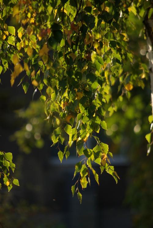 to już tylko wspomnienia #jesień #liście