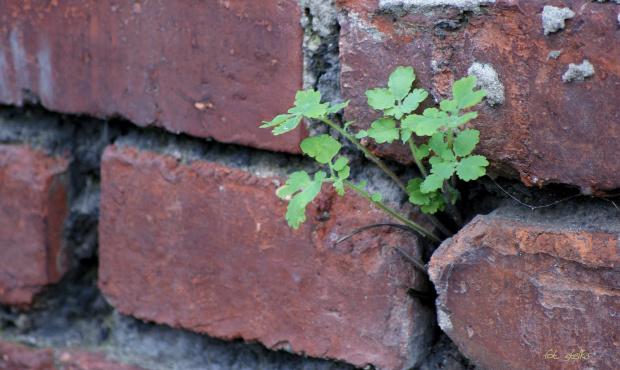 ... :)) #chwasty #przyroda #mur