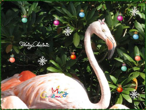 Fotka z humorem życzenia na poważnie dla odmiany. Gdy na niebie pierwsza gwiazda wskaże miejsce Narodzenia, Gdy wokoło stołu ludzie zaczną składać cne życzenia, Niech Twe myśli poszybują na anielskich skrzydeł bieli, niech wspomnienie lat minionych dus...