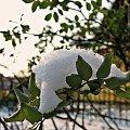 #zima #grudzień #śnieg