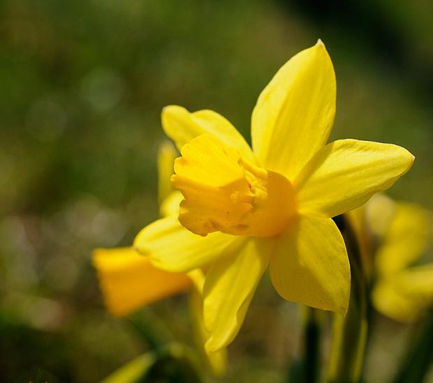 Wiosna! #MiniNarcyzPrzyRowie