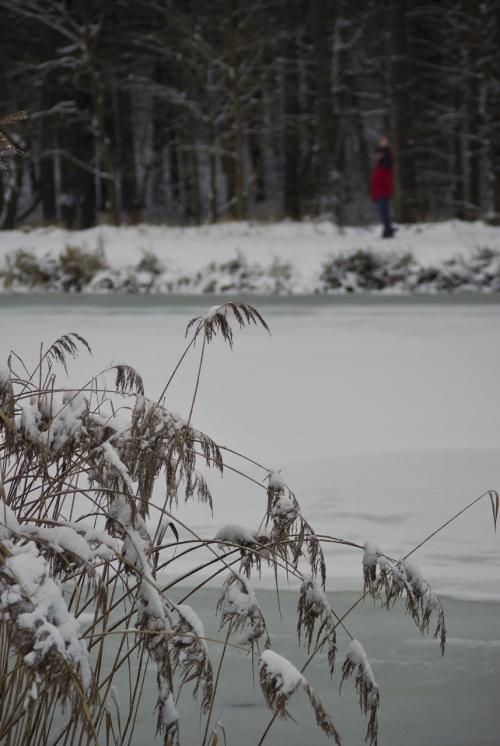 #zima #zalew #styczeń #śnieg #trzciny #las