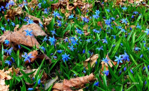 ... #kwiaty #wiosna #ogród #park #makro