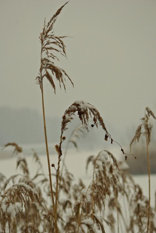 #trzciny #zima #zalew