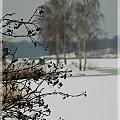 #zima #brzoza #zalew