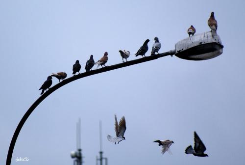Czego szuka każdy człowiek ??? Aby być bezpiecznym, szczęśliwym i bez przymusu robić to, na co ma ochotę ... :)) .... (Epiktet z Hierapolis) .... #ptaki #gołębie