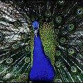 paw 3 #paw #ptaki