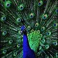 paw 2 #paw #ptaki