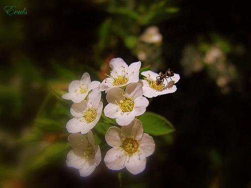 Kwitnące krzaczki #wiosna #kwiaty