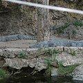 Farma krokodyli #krokodyl #FarmaKrokodyli #kenia #mombasa