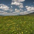Mleczykowa kraina... #arietiss #HDR #krajobraz