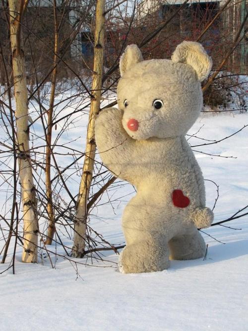 dzisiaj na torach spotkałem miśka polarnego )