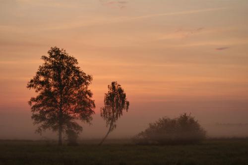 #mgła #łąki #świt #rano #natura