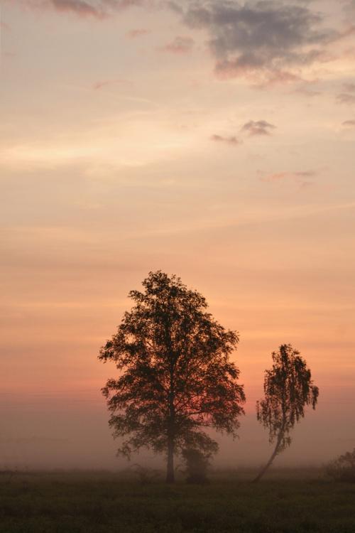 #rano #świt #mgła #niebo #natura #łąki #drzewa