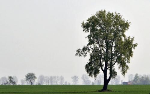 #wiosna #drzewo #krajobraz