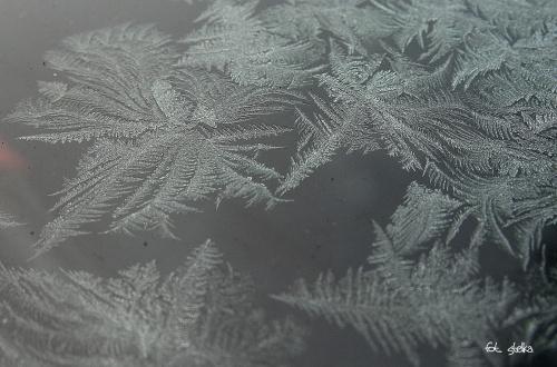 zimowych obrazków ciąg dalszy ... **** ulub. cleo; ana72 **** #zima #śnieg #mróz