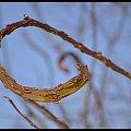 Zima w WPKIW Chorzów #zima #park #wpkiw #drzewo