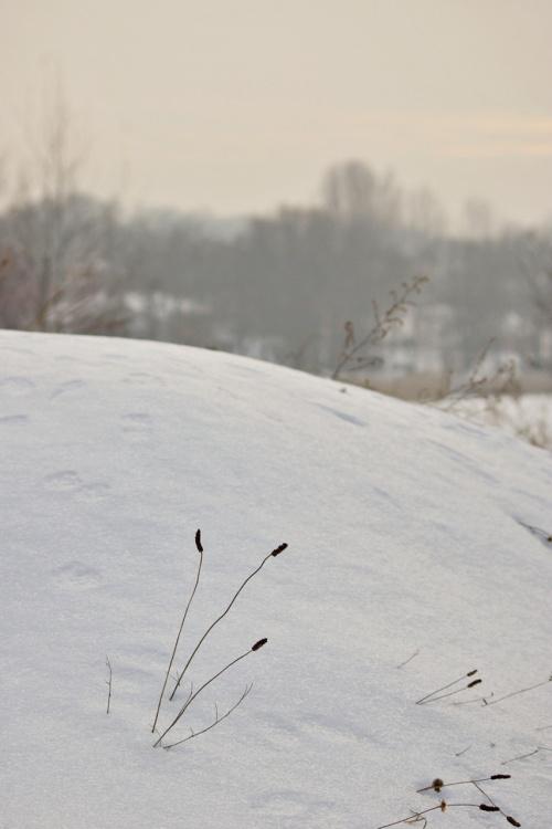 #zima