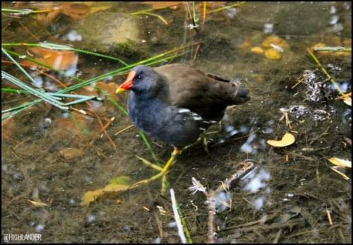 ... #ptaki #natura #przyroda